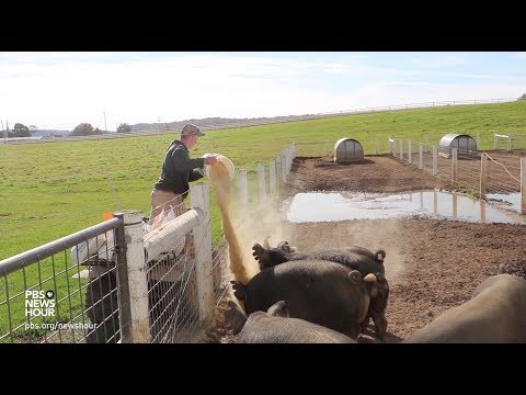 , title : 'Meet a teen farmer earning profits from pasture-raised pigs
