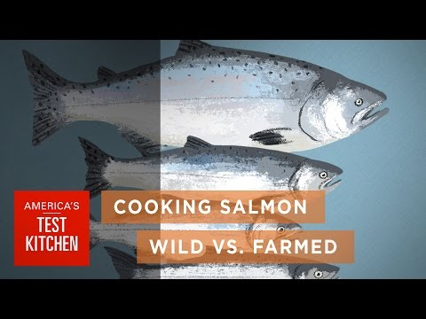 The Ways Wild And Farmed Salmon Differ (And How To Cook Both Perfectly)
