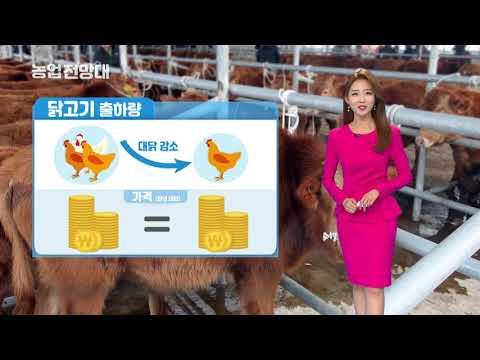 YTN 농업전망대(축산관측 5월) (2019.05.04.) 이미지