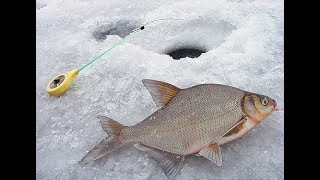 Рыбалка зимния на озерах ленинградской области
