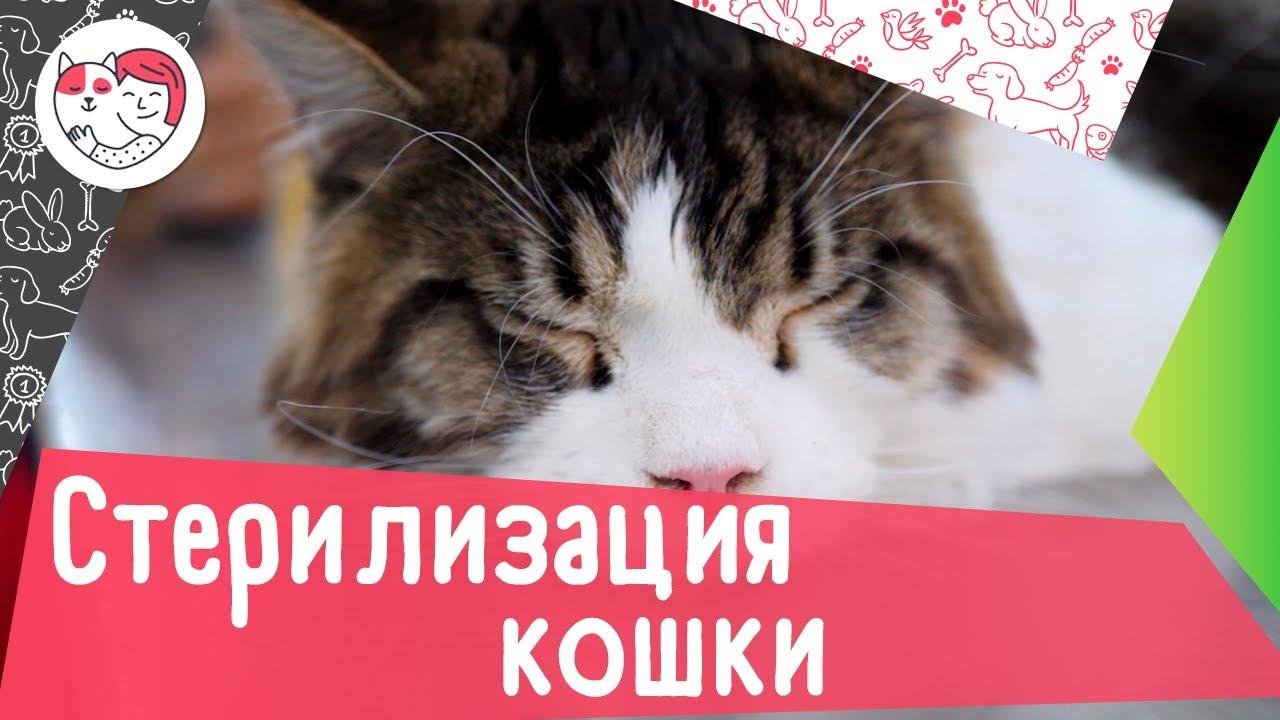 Как подготовить кошку к стерилизации: 5 советов
