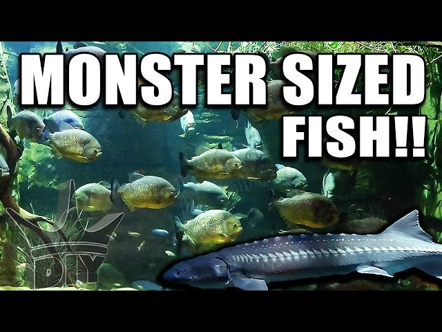 This was an IMPRESSIVE Aquarium!!