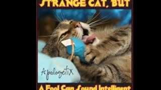 ApologetiX Strange Cat But