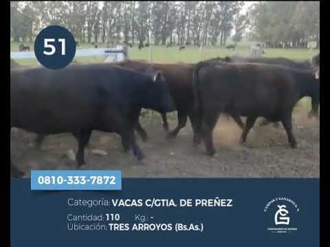 Lote Vaca CGP - Tres Arroyos