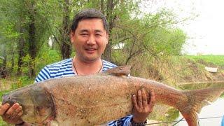 Крупный Толстолобик на 11 кг