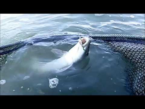 La pesca in Tver in aprile