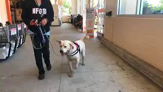 Public access ELECTRONIC PAGER LEASH