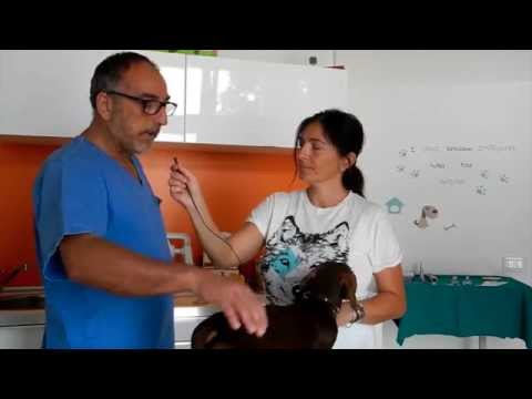 Cura di capelli a psoriasi video