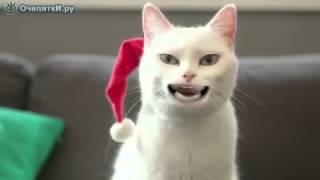 смешной кот, поет!