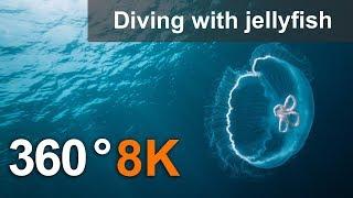 """Смотреть онлайн Ролик VR в 8К качестве """"Заплыв с медузой"""""""