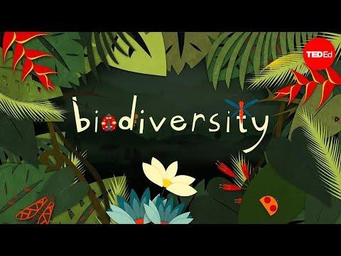 Animal Planet Wallpaper Hd Biodiversity 2 Mrkremerscience Com