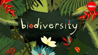 Why is biodiversity so important? – Kim Preshoff