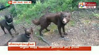 #Sweden #Dogs #ViralVideo நாய்களைச் சிலைபோல நிற்கச் செய்த உரிமையாளர்   Watch Polimer News on YouTube which streams news related to current affairs of Tamil Nadu, Nation, and the World. Here you can watch breaking news, live reports, latest news in politics, viral video, entertainment, Bollywood, business and sports news & much more news in tamil. Stay tuned for all the breaking news in tamil.  #PolimerNews | #Polimer | #PolimerNewsLive | #TamilNews | #PolimerLive | #PolimerLiveNews | #PolimerNewsLiveinTamil | #TamilNewsLive | #TamilLiveNews  ... to know more watch the full video &  Stay tuned here for latest news updates..  Android : https://goo.gl/T2uStq  iOS         : https://goo.gl/svAwa8  Polimer News App Download : https://goo.gl/MedanX  Subscribe: https://www.youtube.com/c/polimernews  Website: https://www.polimernews.com  Like us on: https://www.facebook.com/polimernews  Follow us on: https://twitter.com/polimernews   About Polimer News:  Polimer News brings unbiased News and accurate information to the socially conscious common man.  Polimer News has evolved as a 24 hours Tamil News satellite TV channel. Polimer is the second largest MSO in TN catering to millions of TV viewing homes across 10 districts of TN. Founded by Mr. P.V. Kalyana Sundaram, the company currently runs 8 basic cable TV channels in various parts of TN and Polimer TV, a fully integrated Tamil GEC reaching out to millions of Tamil viewers across the world. The channel has state of the art production facility in Chennai. Besides a library of more than 350 movies on an exclusive basis , the channel also beams 8 hours of original content every day. The channel has extended its vision to various genres including Reality. In short, Polimer is aiming to become a strong and competitive channel in the GEC space of Tamil Television scenario. Polimer's biggest strength is its people. The channel has some of the best talent on its rolls. A clear vision backed by the best brains gives Polimer a clear 