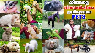 ആരും കാണാത്ത Variety Petsകളുടെ അതിശയിപ്പിക്കുന്ന കാഴ്ച്ച|15 Variety Exotic Pets|Oru Adaar Pets Story