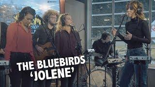 The BlueBirds - Jolene (Dolly Parton Cover) Live @ Ekdom In De Ochtend