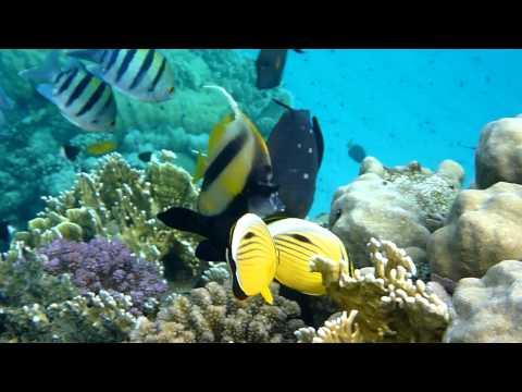 Abu Dabbab Reef South, Abu Dabbab (Marsa Alam),Ägypten