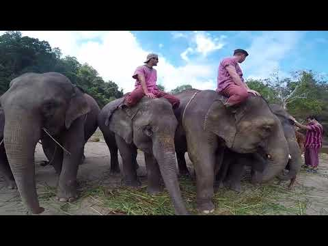 Elephant Owner for a Day - Patara Elephant Farm