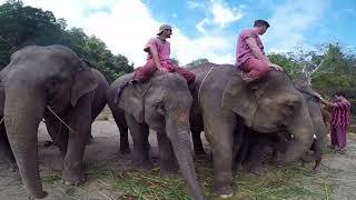 Elephant Owner for a Day - Patara Elephant Farm
