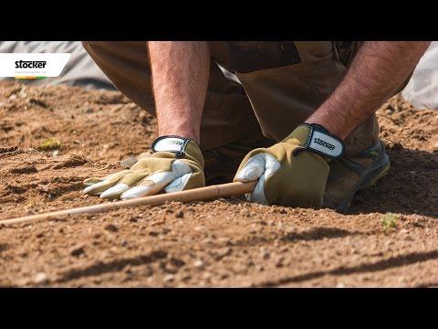 Semina e protezione degli ortaggi - tecniche e consigli - come coltivare l´orto biologico