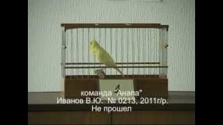 243. 5-й Краснодарский конкурс.