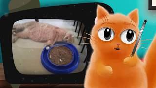 Кот Джем знакомиться с кошкой Мусей. Смешной кот! 🐈