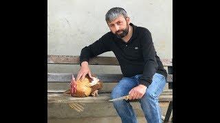 ALLAH HOROZ'UN TAKSİRATINI AFFETSİN :))#horoz #jackrussell #malaklı #dogoargentino #kangal #narkoz