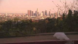 The Majestic Plastic Bag (2010) Video