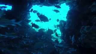 preview picture of video 'Diving Boatswain Bird Rock, Ascension Island'