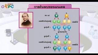 สื่อการเรียนการสอน กฎของเมนเดล ตอนที่ 2 ม.3 วิทยาศาสตร์