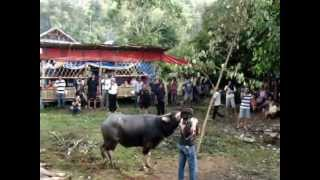 preview picture of video 'ExoticAdventureToursTV: Tour 2009 - Sulawesi (Indonesia)'