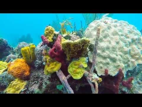 Periwinkle Reef   Exumas 9:17:2015