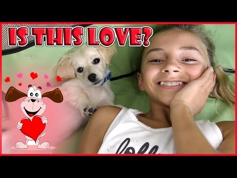 IS THIS PUPPY LOVE? | WE NEED YOUR HELP! | We Are The Davises