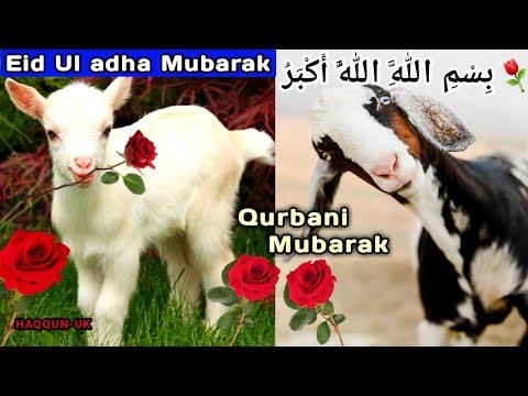 , title : 'Happy Eid ul Adha Mubarak Video/Eid Greeting Ecard/Happy Eid Mubarak 2020 Latest Video Status'