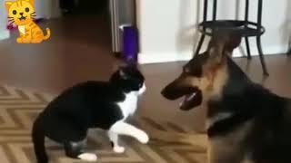 ПРИКОЛЫ с котами и собаками. Смешная подборка отношений кошек и собак. Funny cats and dogs.