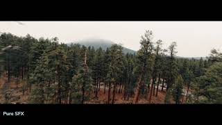 Fpv Fly Through an Incredible Forest