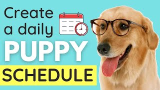 Puppy Schedule: How To Create A Daily Schedule for your Puppy