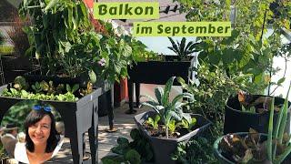Balkon im September - Balkongarten Vlog - Balkongarten im September - Balkongarten Rundgang