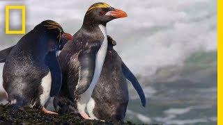 Wildlife: Resurrection Island - Series Trailer | National Geographic