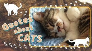 CS250【癒し HEALING】Quotes About CATS (1)