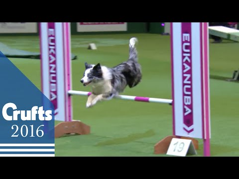 Agility - Championship Final | Crufts 2016