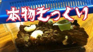 【そっくりスイーツ】生きてるみたい!?幼虫そっくりのお菓子を作る! | Kholo.pk