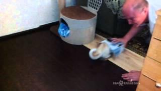 Self-packing cats / Самоупаковывающиеся коты - Video Youtube