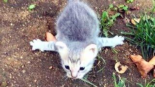 Котенок с трудом полз по земле, как-то странно перебирая лапками...