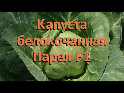 Капуста белокочанная Парел F1 (parel-f1) 🌿 Парел F1 обзор: как сажать, семена капусты Парел F1