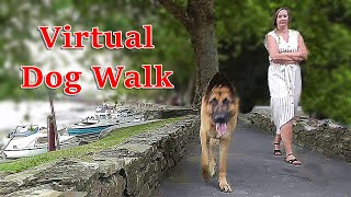 Walk Your Dog TV : Virtual Dog Walk Videos for Dogs - Sunny Corner 8 HOURS