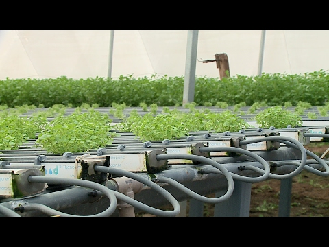 Recursos hídricos na agricultura