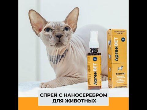 Мнение Павла Попкова— ветеринара-эксперта Международного Кинологического Союза
