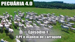 Fazenda é exemplo de ILPF e manejo preventivo de parasitas