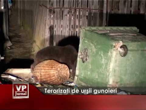 Terorizaţi de urşii gunoieri