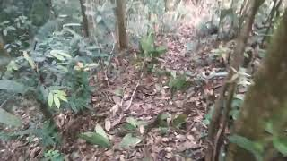 preview picture of video 'Bukit raya kalimantan barat, pertualangan #1'